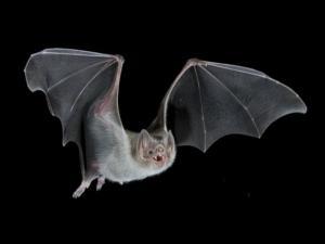 Foto de un vampiro