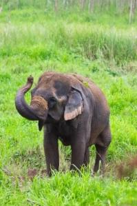 Tarea Elefante
